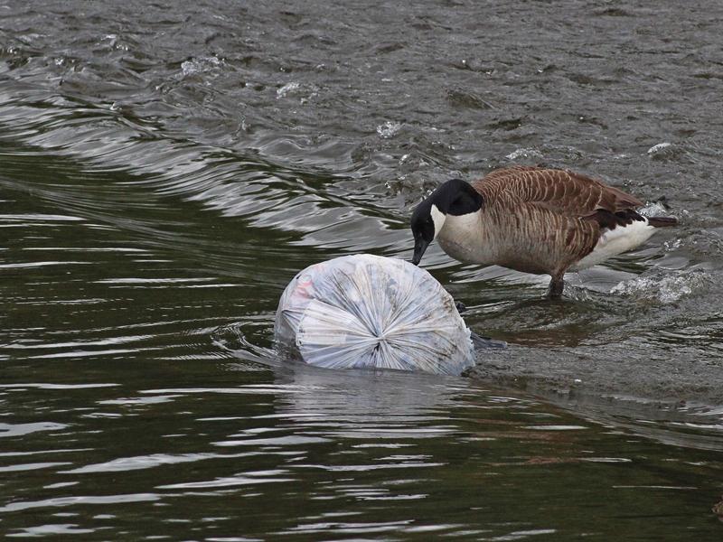 Acqua inquinata e pericolosa: divieto di consumo a Montella